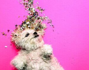 this sparkly puppy is worth a million bucks, and so are you.