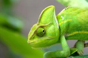 green green green envious voice actor
